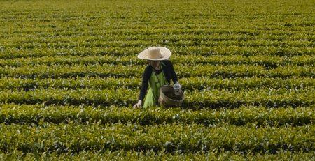 Viví la experiencia de elaborar tu propio té en Diciembre, Febrero o Marzo